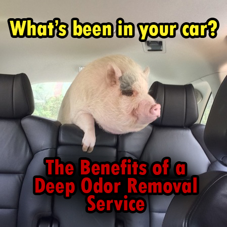 Benefits of a Deep Odor Removal Service